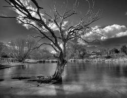 Infrared Pond III by La-Vita-a-Bella