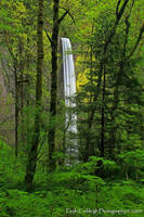 Lurking at Latourell Falls by La-Vita-a-Bella
