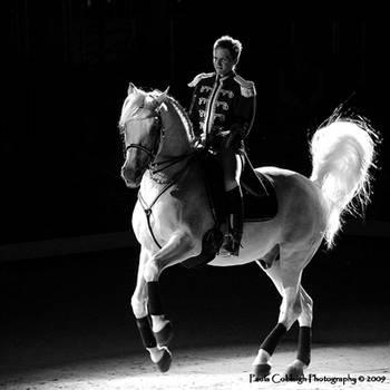 Lipizzaner Stallion by La-Vita-a-Bella