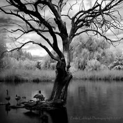 The Pond by La-Vita-a-Bella