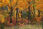 Autumn's Haven by La-Vita-a-Bella