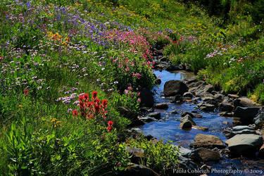 Wildflowers and Creek by La-Vita-a-Bella