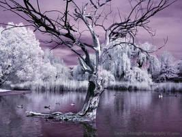 Infrared Pond V by La-Vita-a-Bella