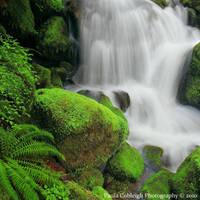 Watson Falls study by La-Vita-a-Bella