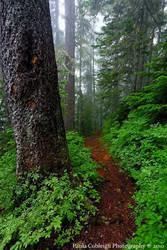 Forest Trail by La-Vita-a-Bella