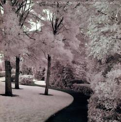 Path through Cotton Candy - IR by La-Vita-a-Bella
