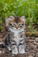 Cute Fluffy Kitten by La-Vita-a-Bella