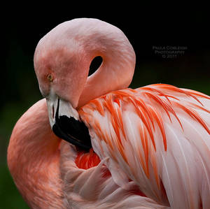 Pink Flamingo by La-Vita-a-Bella