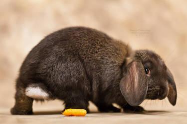 I poop carrots by La-Vita-a-Bella