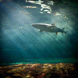 Shark Week by La-Vita-a-Bella