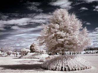 Infrared Show Garden by La-Vita-a-Bella