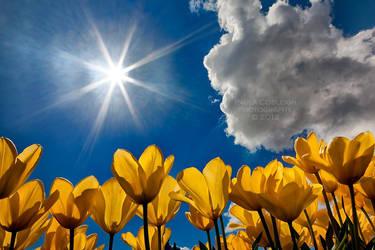 Soak up the Sun by La-Vita-a-Bella