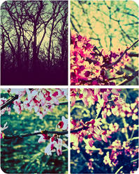 Nature Mix Quadtych by VINpixPhotography