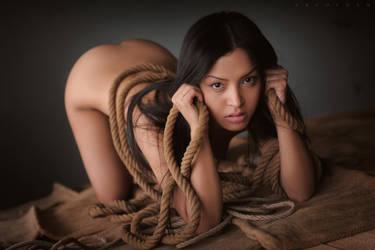 Wild Cat by ArtofdanPhotography
