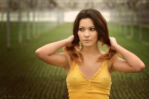 Yellow by ArtofdanPhotography