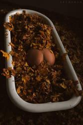 Autumn Pumpkin by ArtofdanPhotography