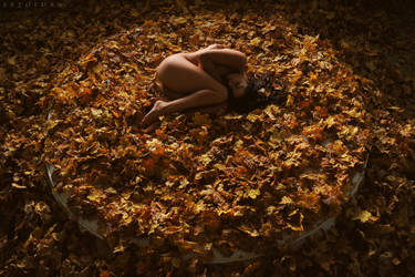 The Circle Of Autumn by ArtofdanPhotography