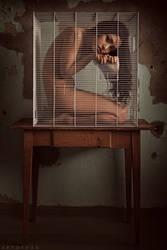 Birdcage by ArtofdanPhotography