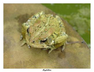 Amphibian by jimloomis