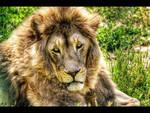 lion king by Iulian-dA-gallery