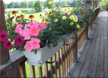 Flower Boxes by WDWParksGal-Stock