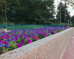 A Flower Bed and Cement Wall IMG 0428 by WDWParksGal-Stock
