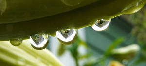 Droplets within droplets by duggiehoo