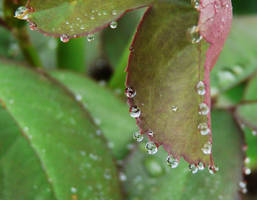 Dew drops by duggiehoo
