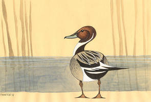 Northern Pintail Duck by iktis
