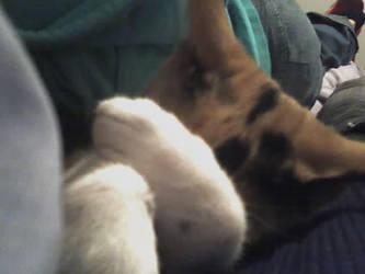 sleepy kitty by m4xp0w3r