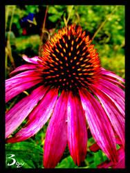 Summer Flower by Baxy77