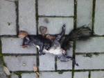 Dead squirrel by Dragea