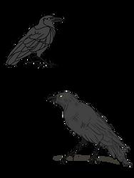 Ravens by Azimizian