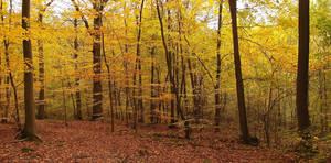 Golden autumn by yuushi01