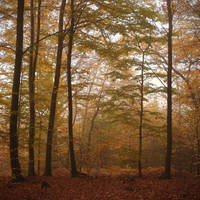 Autumn and mist 2012 by yuushi01