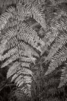 Ferns by yuushi01