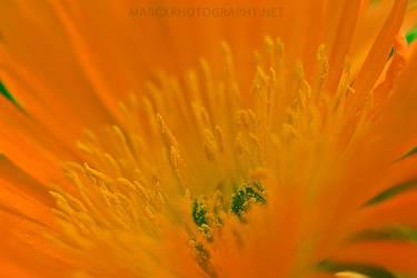 Flower Power by djwedo