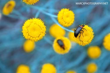 Yellow by djwedo