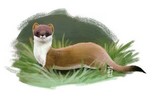 Weasel by limeSmoothie