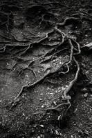 Veins of Gaia by padika11