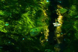 A leaf and a lake by padika11