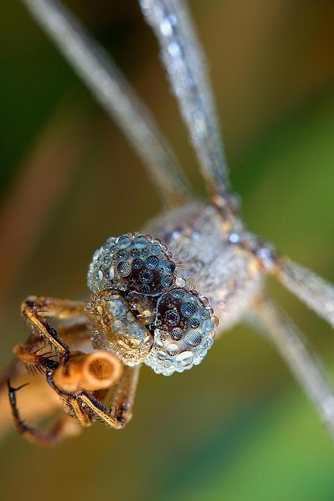 Contact lenses III by padika11