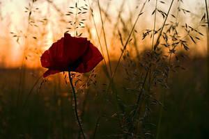 Poppy and Dawn by padika11