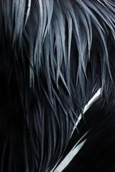 Feathers by padika11