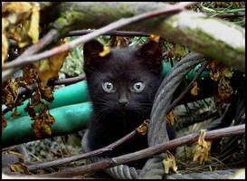 Cat. by Villya