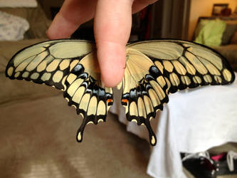 Giant Swallowtail part 2 by Hobbit-Babe