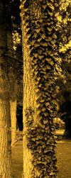 Tree by justblue1