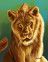 Young Lion by rkamalart