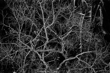The skeletal tree by Apeximagery
