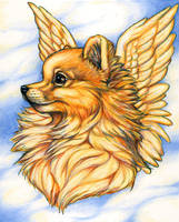 Pomeranian Angel by GrimVixen